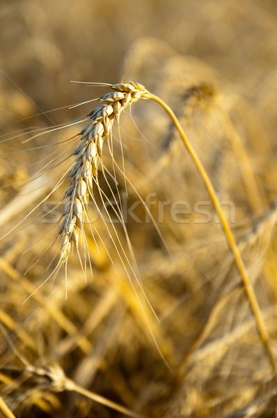 юг Украина продовольствие лет области Сток-фото © mycola