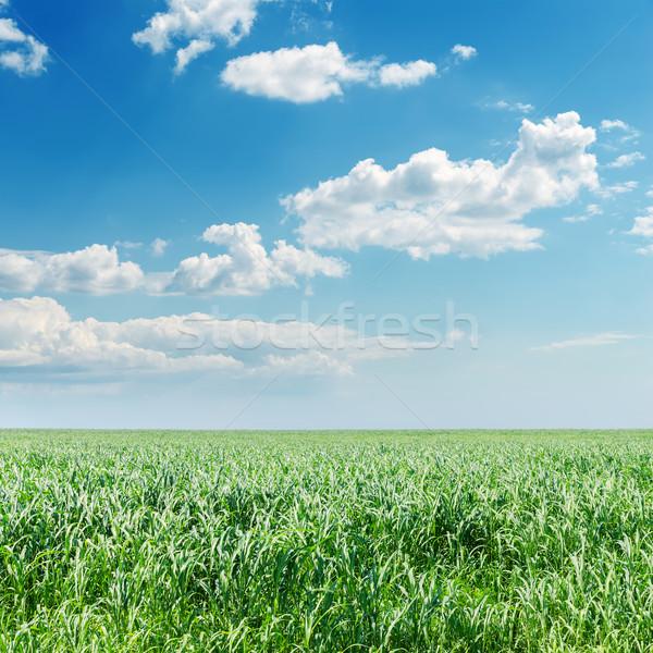 Nublado céu verde campo primavera grama Foto stock © mycola
