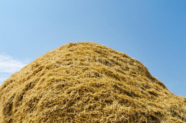 Hooiberg stro hoop bewolkt hemel voedsel Stockfoto © mycola