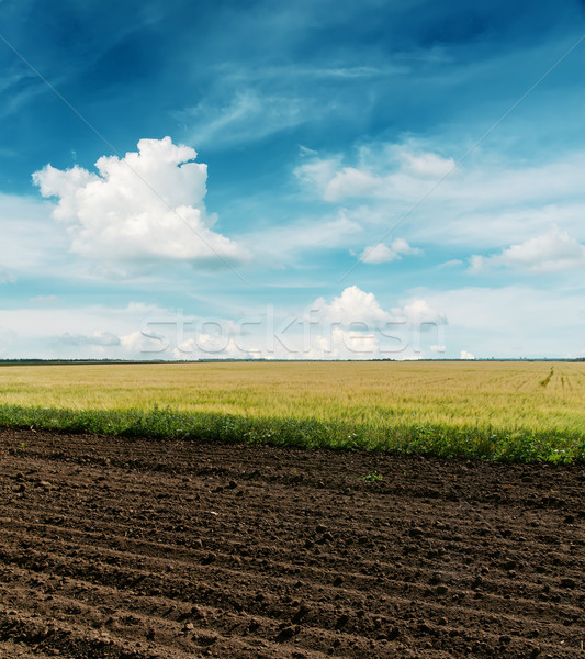 black plowed and green fields under cloudy sky Stock photo © mycola