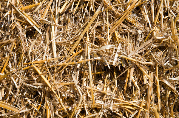 View paglia primo piano erba luce campo Foto d'archivio © mycola