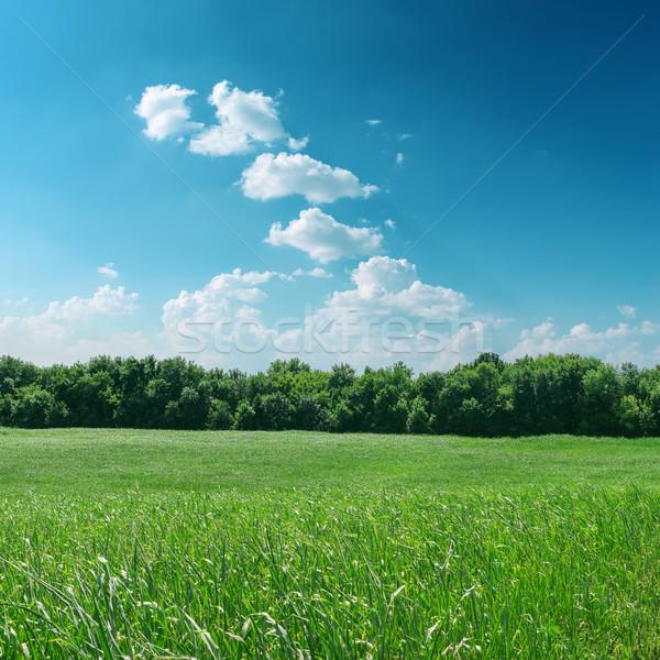 Zielona trawa drzewo mętny niebo wiosną tle Zdjęcia stock © mycola