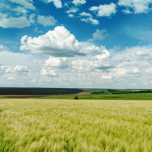 green agricultural field and clouds in blue sky Stock photo © mycola