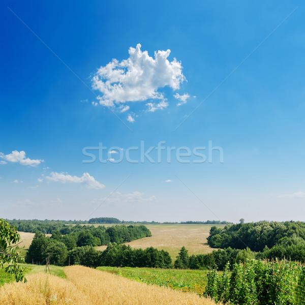 Champs arbres bleu nuageux ciel bois Photo stock © mycola