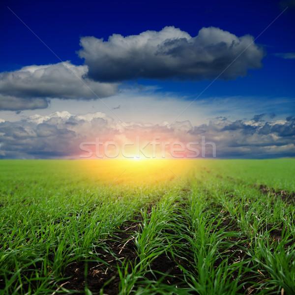 Sonnenuntergang Bereich Frühling Hintergrund Sommer grünen Stock foto © mycola