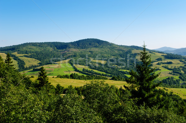 green mountain landscape with trees in Carpathians Stock photo © mycola