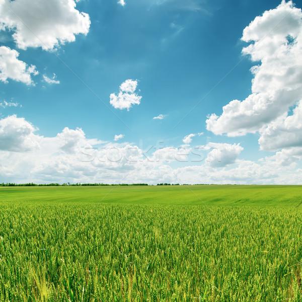 Zielone dziedzinie niebieski mętny niebo trawy Zdjęcia stock © mycola