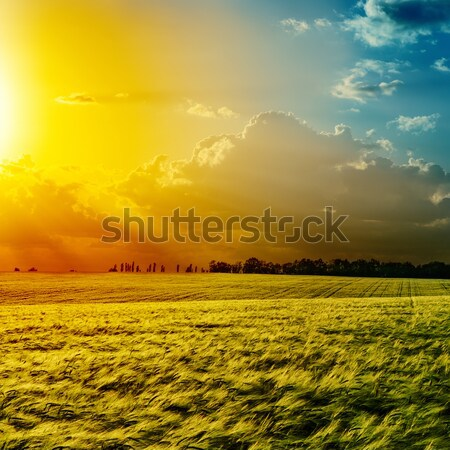 Pôr do sol verde campo céu grama natureza Foto stock © mycola