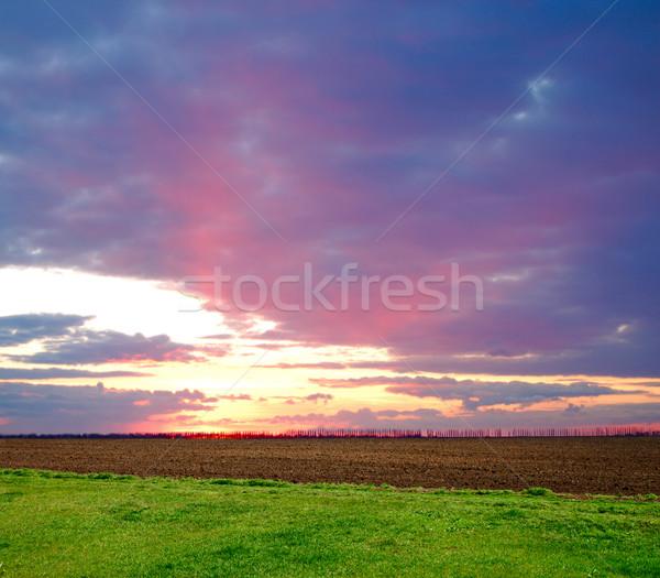 Pôr do sol profundo cor nuvens prado árvore Foto stock © mycola
