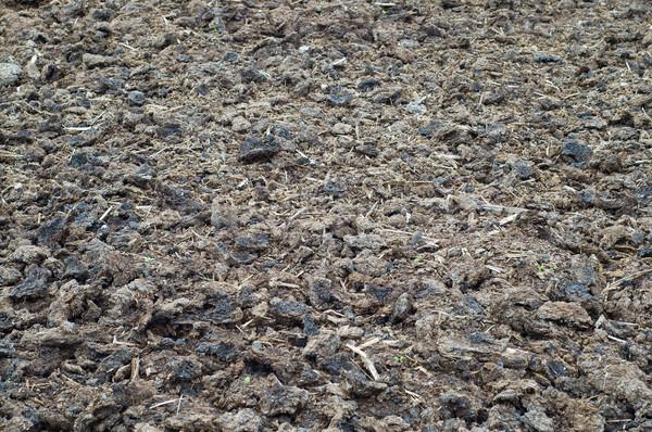 textured earth Stock photo © mycola