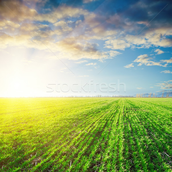 sunset over agriculture green field Stock photo © mycola