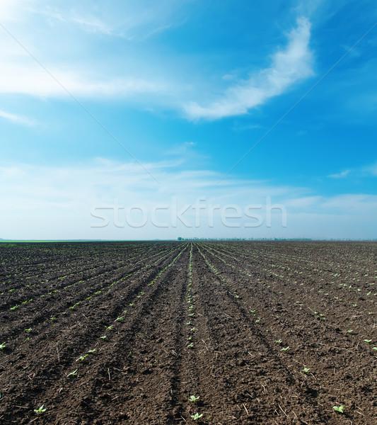 Mętny niebo wiosną dziedzinie świetle piękna Zdjęcia stock © mycola
