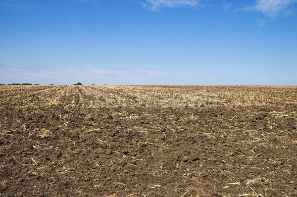 土壌 秋 空 太陽 フルーツ フィールド ストックフォト © mycola