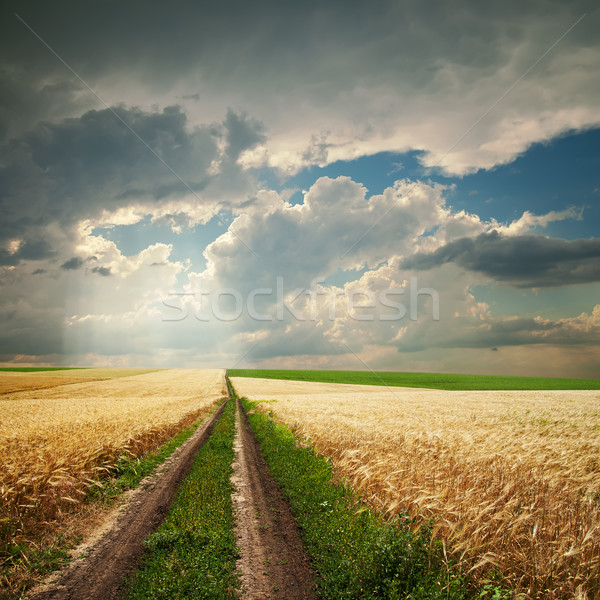 road in golden agricultural field under dramatic clouds Stock photo © mycola