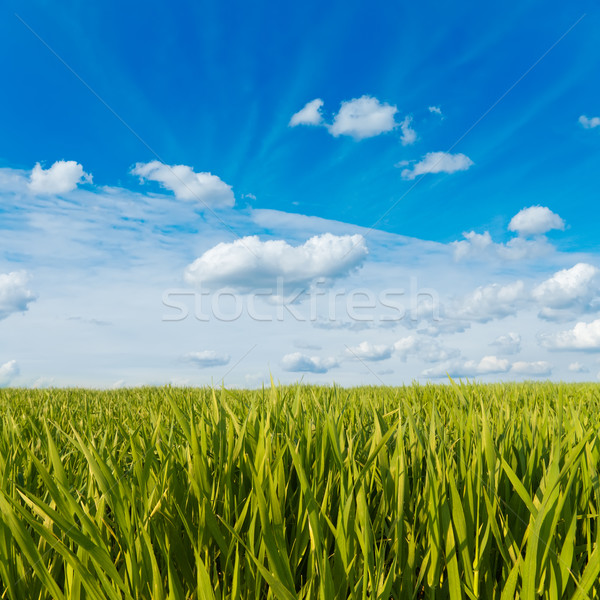 Grünen Gras bewölkt Himmel Sonne Natur Licht Stock foto © mycola
