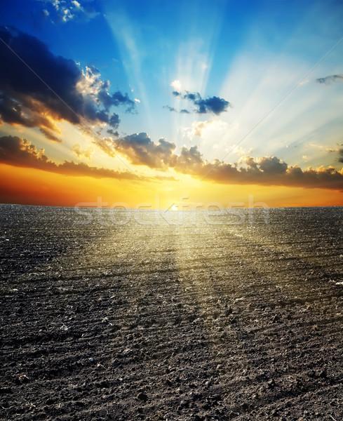 sunset over black field Stock photo © mycola