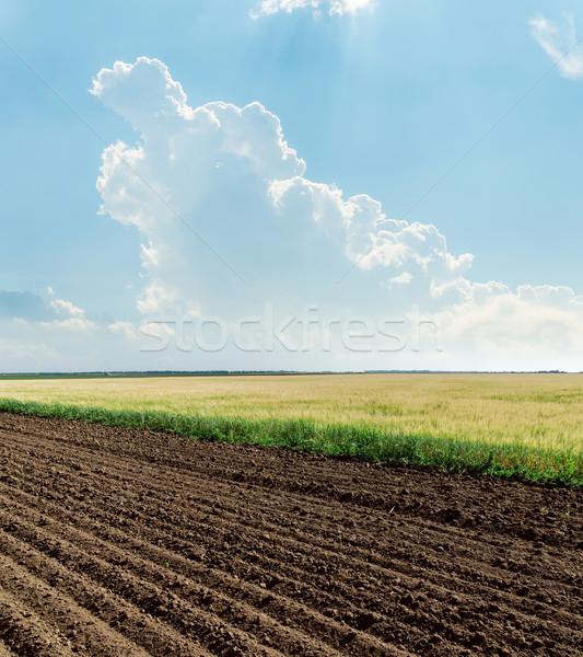 Agricola campi nube cielo blu cielo erba Foto d'archivio © mycola