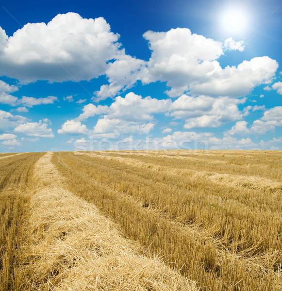 collected harvest on the field under sun Stock photo © mycola