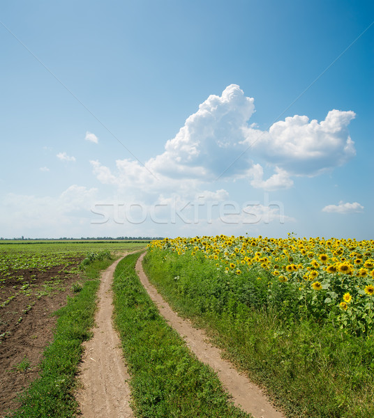 Road in field under clouds Stock photo © mycola
