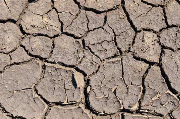 dry earth as texture Stock photo © mycola