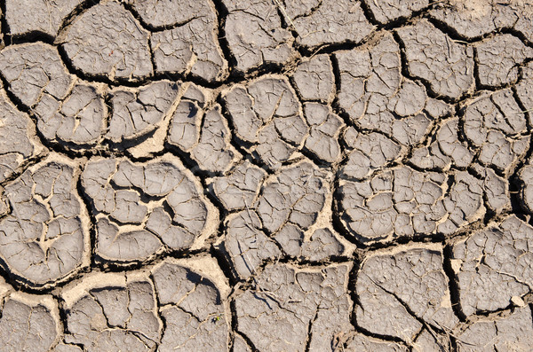 dry cracked earth as texture Stock photo © mycola