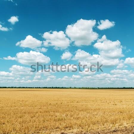 Bereich Weizen bewölkt Himmel Essen Landschaft Stock foto © mycola