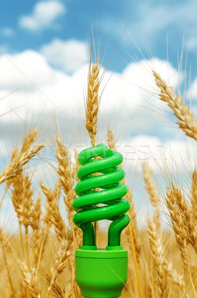 Foto stock: Verde · eco · bulbo · campo · colheita · macio