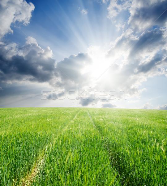 út zöld árpa nap égbolt tavasz Stock fotó © mycola