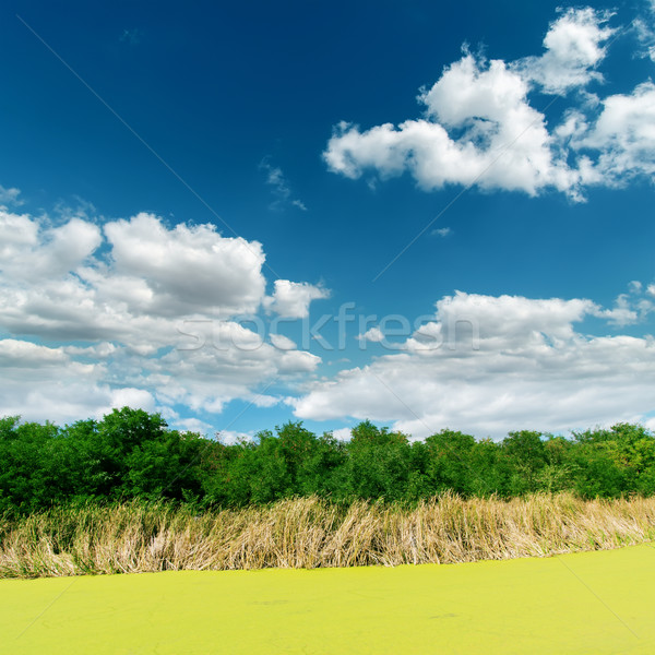 green swamp on sunny day under clouds Stock photo © mycola