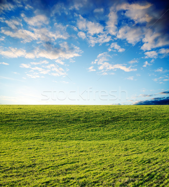 Verde campo pôr do sol agrícola primavera grama Foto stock © mycola