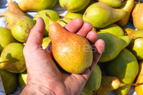 Pereira novo colheita mão fruto verão Foto stock © mycola