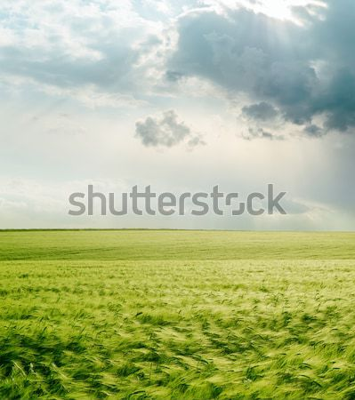 Dramático céu verde campo grama pôr do sol Foto stock © mycola