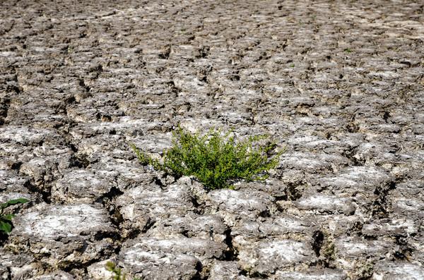 Foto stock: Verde · planta · secas · rachado · lama · negócio