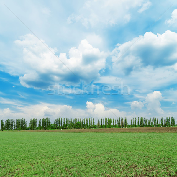 low clouds in blue sky over green field Stock photo © mycola