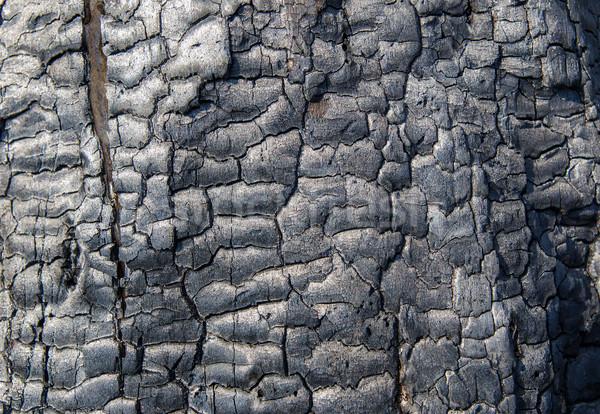 burnt wood texture Stock photo © mycola
