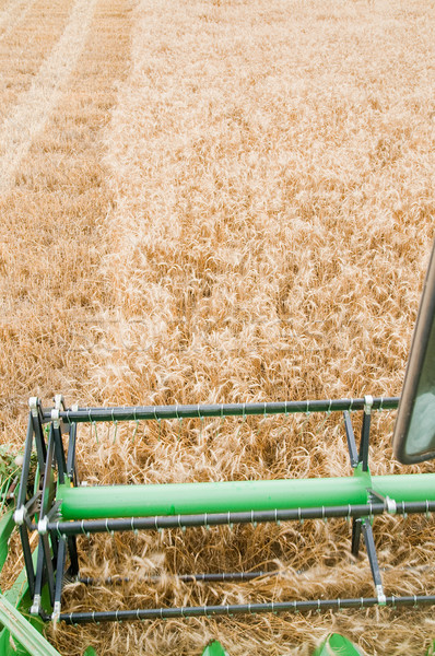 Harvesting time Stock photo © mycola