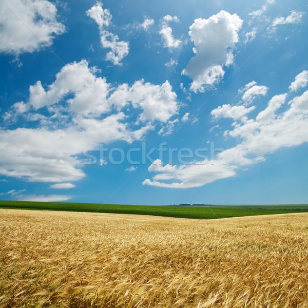Złoty zbiorów mętny niebo charakter krajobraz Zdjęcia stock © mycola