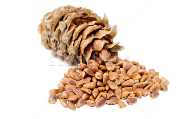 Cones and Nuts of Siberian Cedar Pine Stock photo © mycola