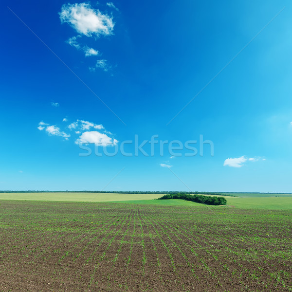 field with little shot and blue sky Stock photo © mycola