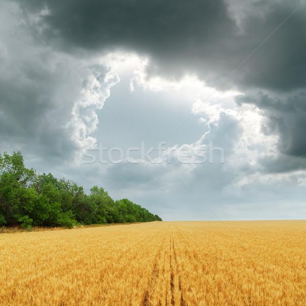 darken clouds over golden field. rain before Stock photo © mycola