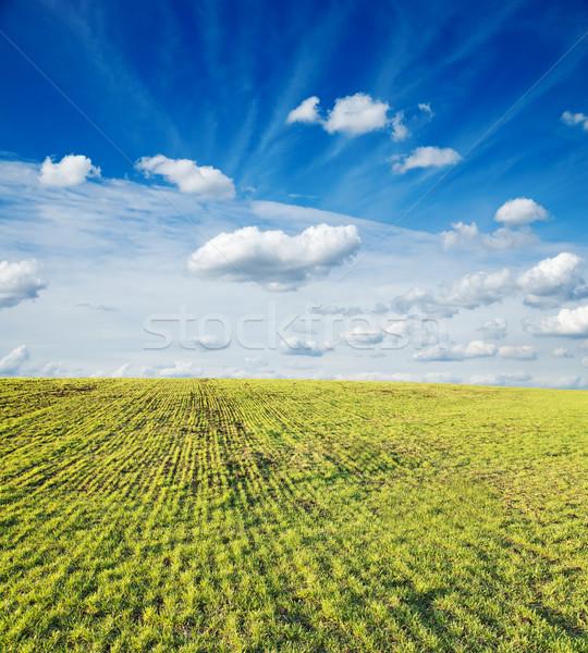 green field under cloudy sky Stock photo © mycola