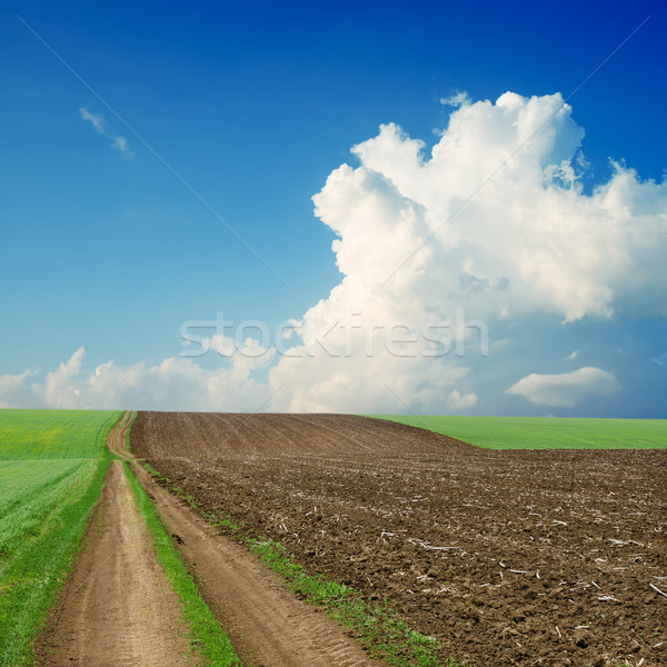 dirty road near green and black field under cloudy sky Stock photo © mycola