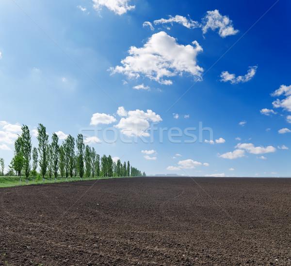 Preto campo blue sky negócio céu paisagem Foto stock © mycola