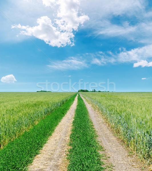 Rural estrada horizonte verde campos blue sky Foto stock © mycola