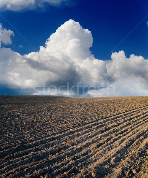black ploughed field Stock photo © mycola