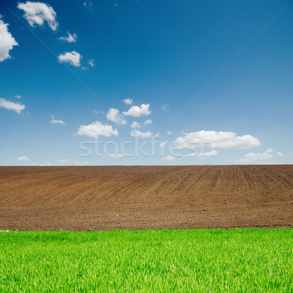 green grass and black plowed fields under blue sky Stock photo © mycola