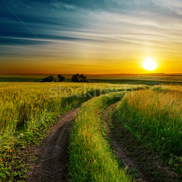 good sunset and dirty road in green spring field Stock photo © mycola