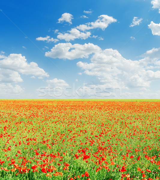 Rot Mohnblumen Bereich blau bewölkt Himmel Stock foto © mycola