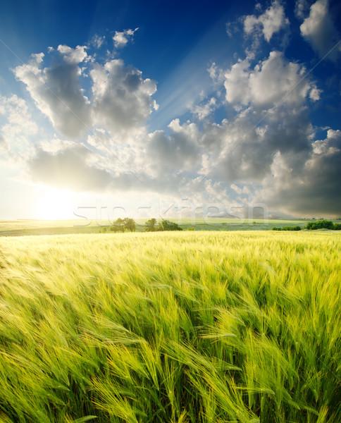 Groene gerst zonnestralen hemel voorjaar landschap Stockfoto © mycola