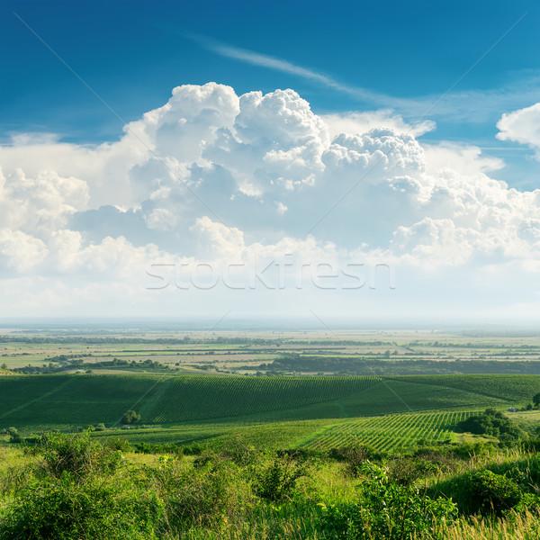 Nuvens verde vinha Ucrânia céu natureza Foto stock © mycola